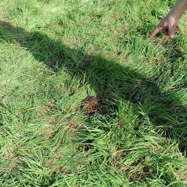 ŠOKANTNI NOVI DETALJI! U Jeleninom dušniku forenzičar pronašao grančicu koja govori mnogo toga! (FOTO)