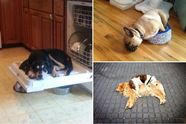 MASAKR: Otrovano 25 pasa širom Mladenovca, ubijeni i vlasnički psi!