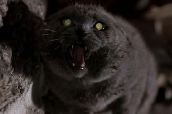 GORE OD HOROR FILMA! Mačka mrtvom gazdi pojela lice!