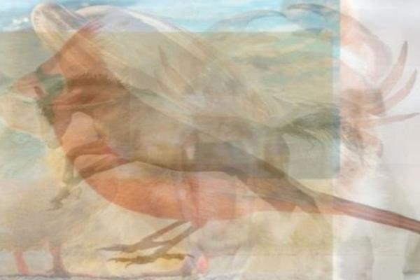 Ptica, konj, delfin, ili nešto drugo? Ono što PRVO ugledate na ovoj slici, otkriće vam KAKVA ste OSOBA! (FOTO)