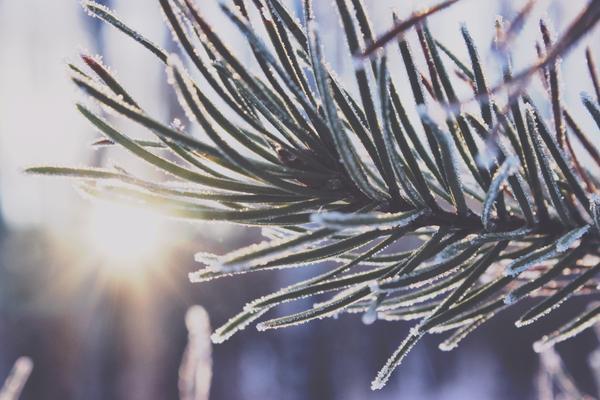 NEPRIJATNO IZNENAĐENJE SVAKOG JUTRA SVE DO PONEDELJKA: Nema proleća, iz zime idemo direktno u leto!