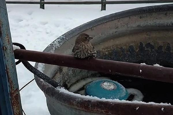 NIJE MOGLA DA SE ODLEPI: Ptičica se od hladnoće zaledila za šipku, a onda se pojavila ova LJUDINA! (VIDEO)
