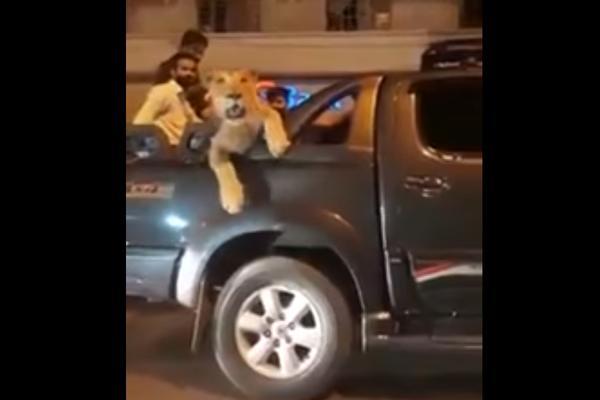 LAVOM KROZ MASU: Strpao životinju u gepek, pa jurio gradom! Ljudi se šokirali! (VIDEO)