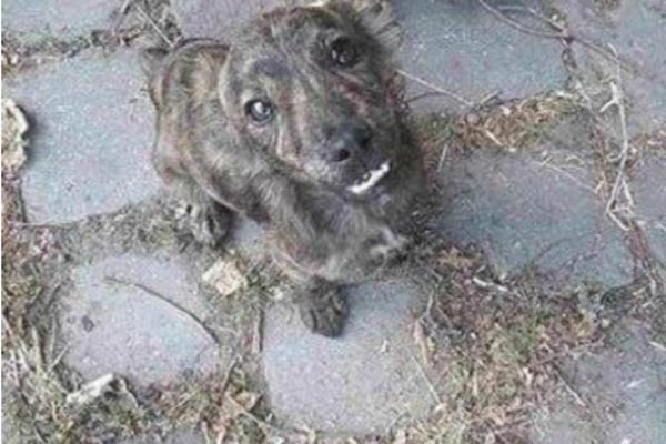OVO ŠTENE JE UBIJENO U SRBIJI U SEKTAŠKOM RITUALU! Stravičan prizor unakaženog psa ne gledajte punog stomaka! (UZNEMIRUJUĆE FOTOGRAFIJE)
