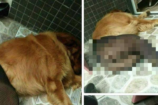 OVO JE NAJODVRATNIJA STVAR KOJA SE DESILA U SRBIJI! Otkriven BORDEL sa psima, nudi se 1.000 evra nagrade ko otkrije gde se nalaze!