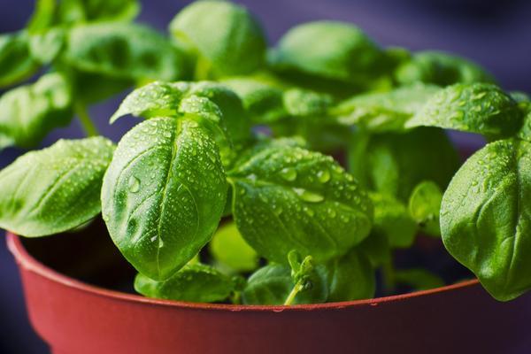 Ova biljka je rajskog porekla! 15 razloga zašto je morate imati u kući! (FOTO) (GIF)