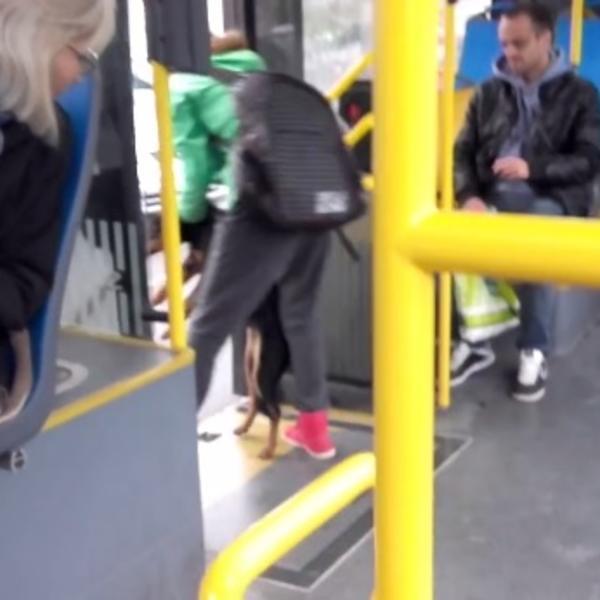 Beograđanka je izbacila psa iz autobusa na kišu: ALI NIJE NI SANJALA ŠTA ĆE SE DOGODITI U SEKUNDI! (VIDEO)