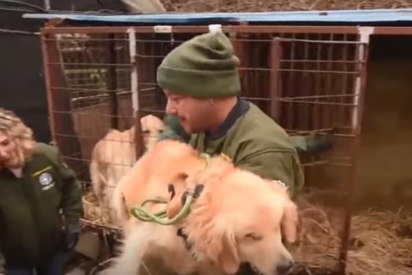 HTELI SU DA IH UBIJU STRUJOM PA DA IH POJEDU: Spaseno 170 pasa sa farme u Južnoj Koreji! (VIDEO)