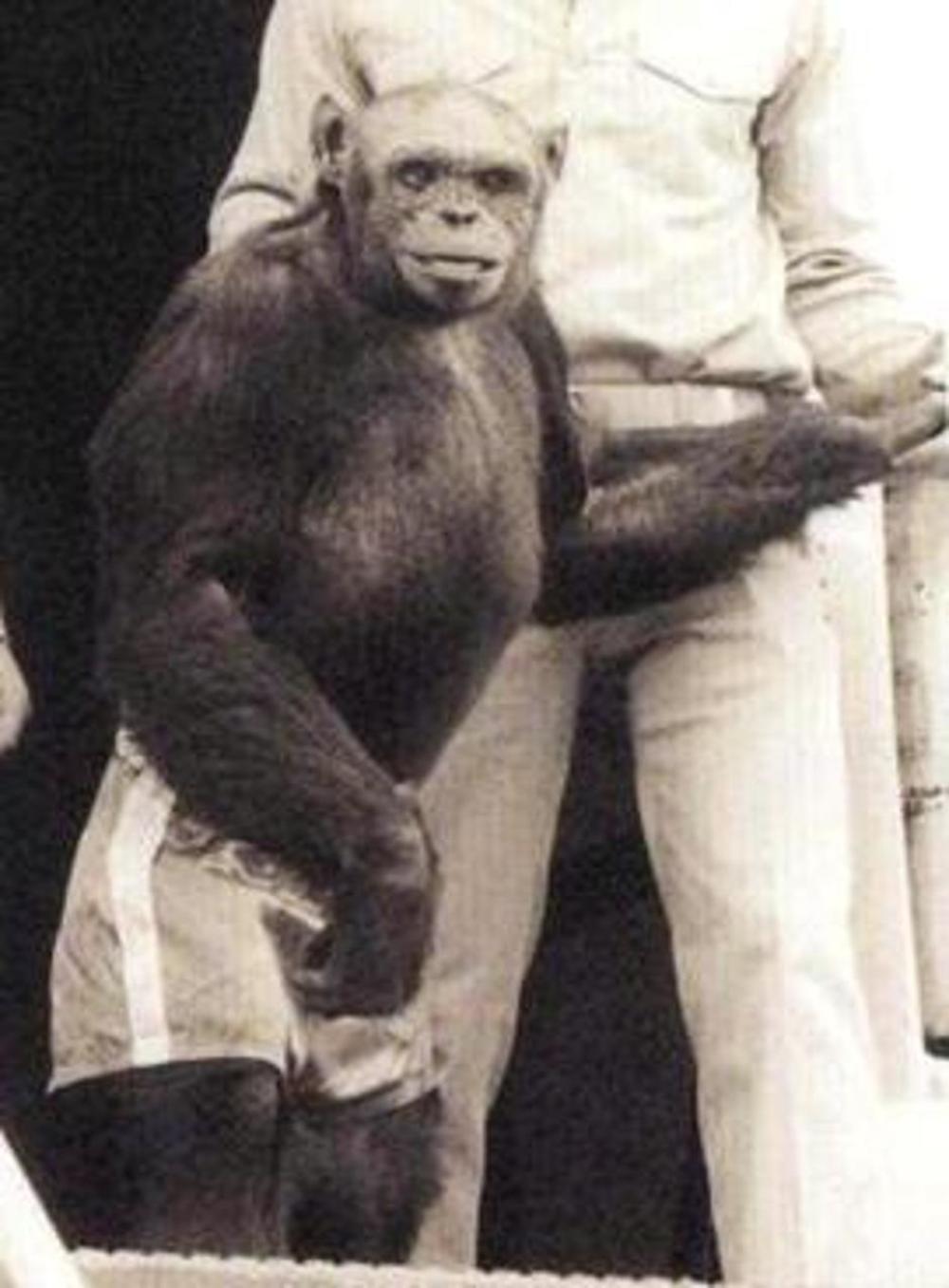 Majmun Oliver