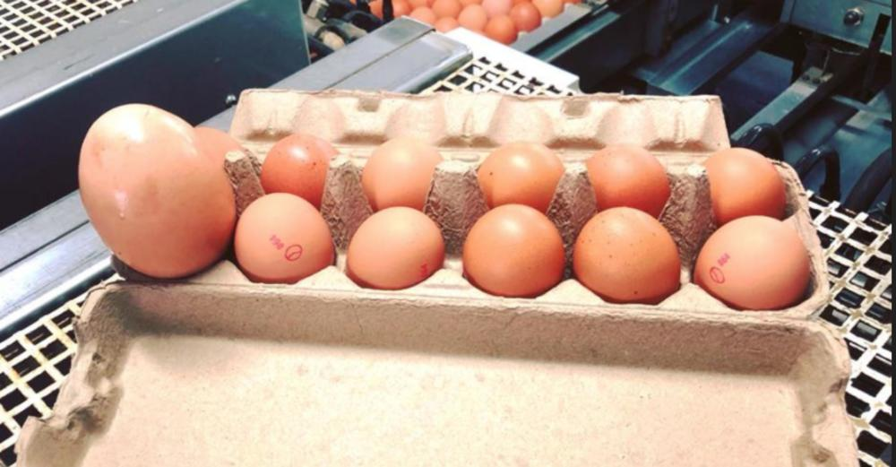 Jaje je dosta veće od prosečnog
