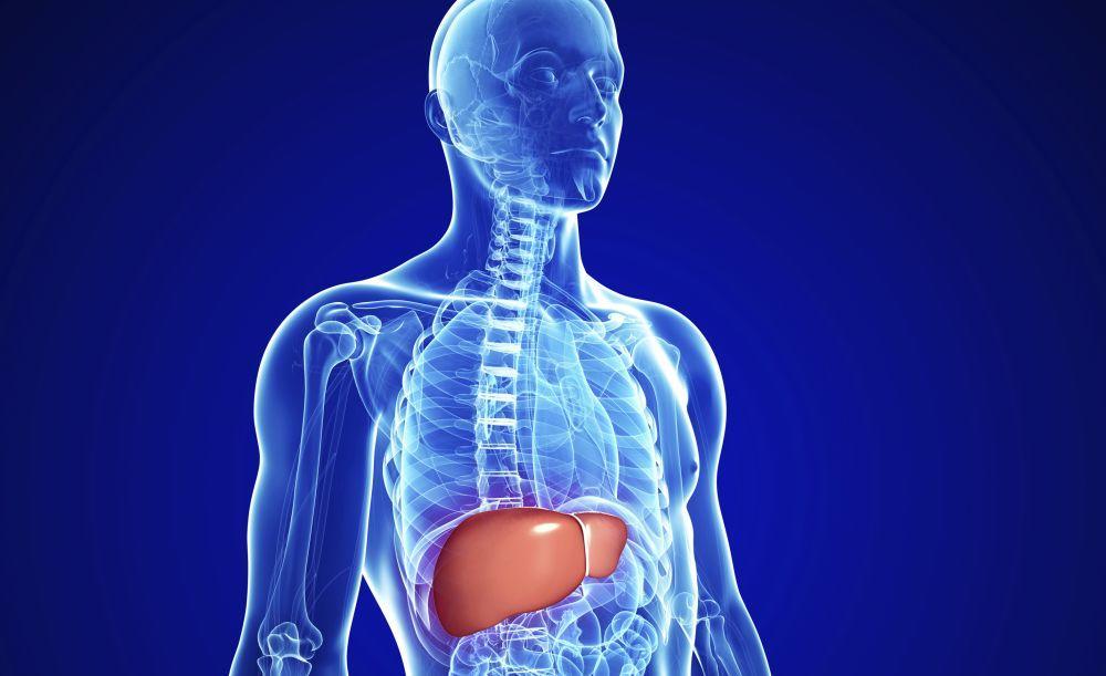 Stres, konzumiranje lekova i ishranapuna aditiva i loših kalorija – najčešći su uzroci bolesti jetre
